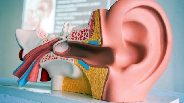Curso Reabilitação Vestibular: Intervenção nas Disfunções do Equilíbrio
