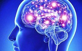 Neurociência da Dor para Fisioterapeutas (Out 2019) - Porto