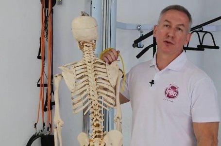 Curso Online: Ciência do Movimento - Uma abordagem prática e científica da musculação