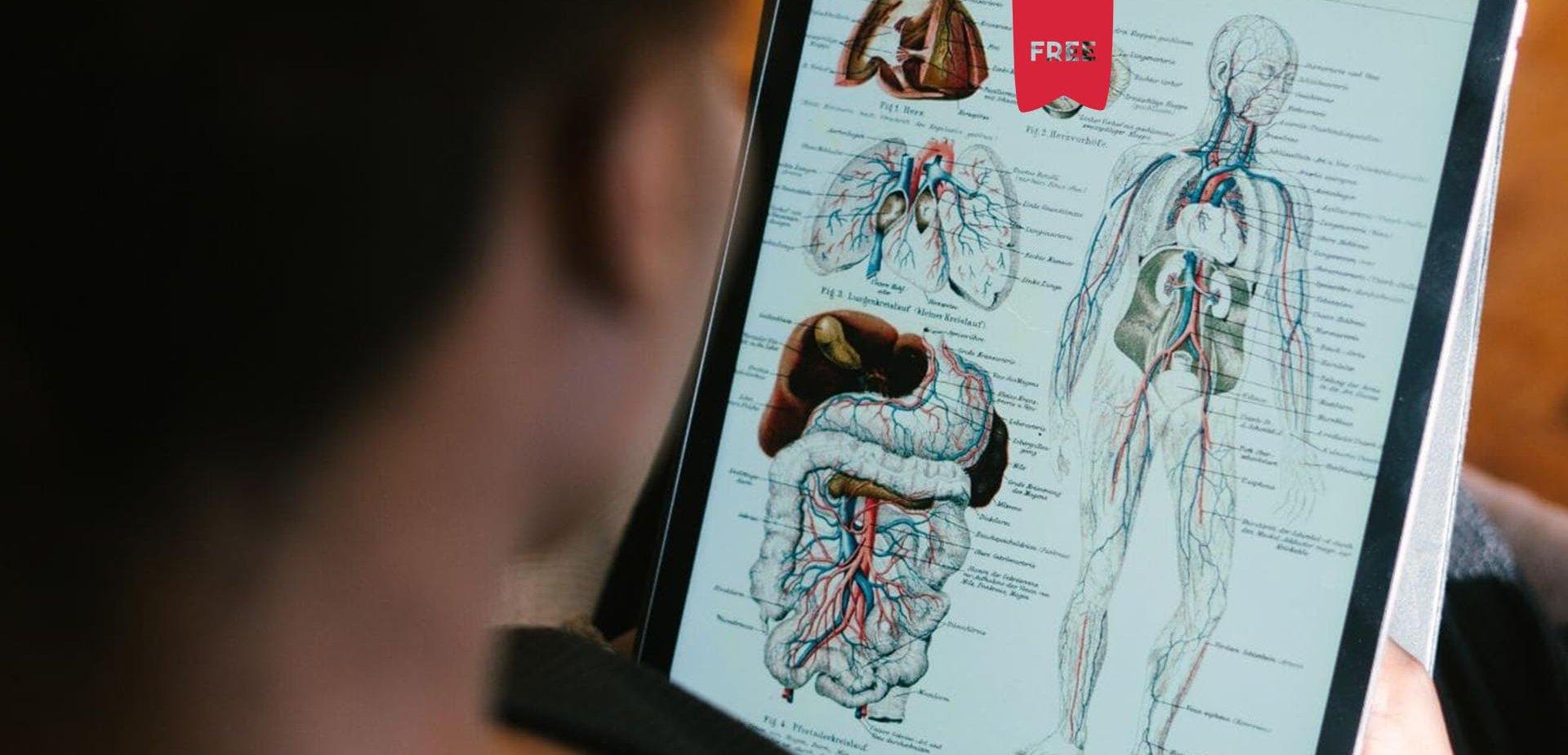 Indução Miofascial: Anatomia, Fisiologia e Implicações na Prática Clínica