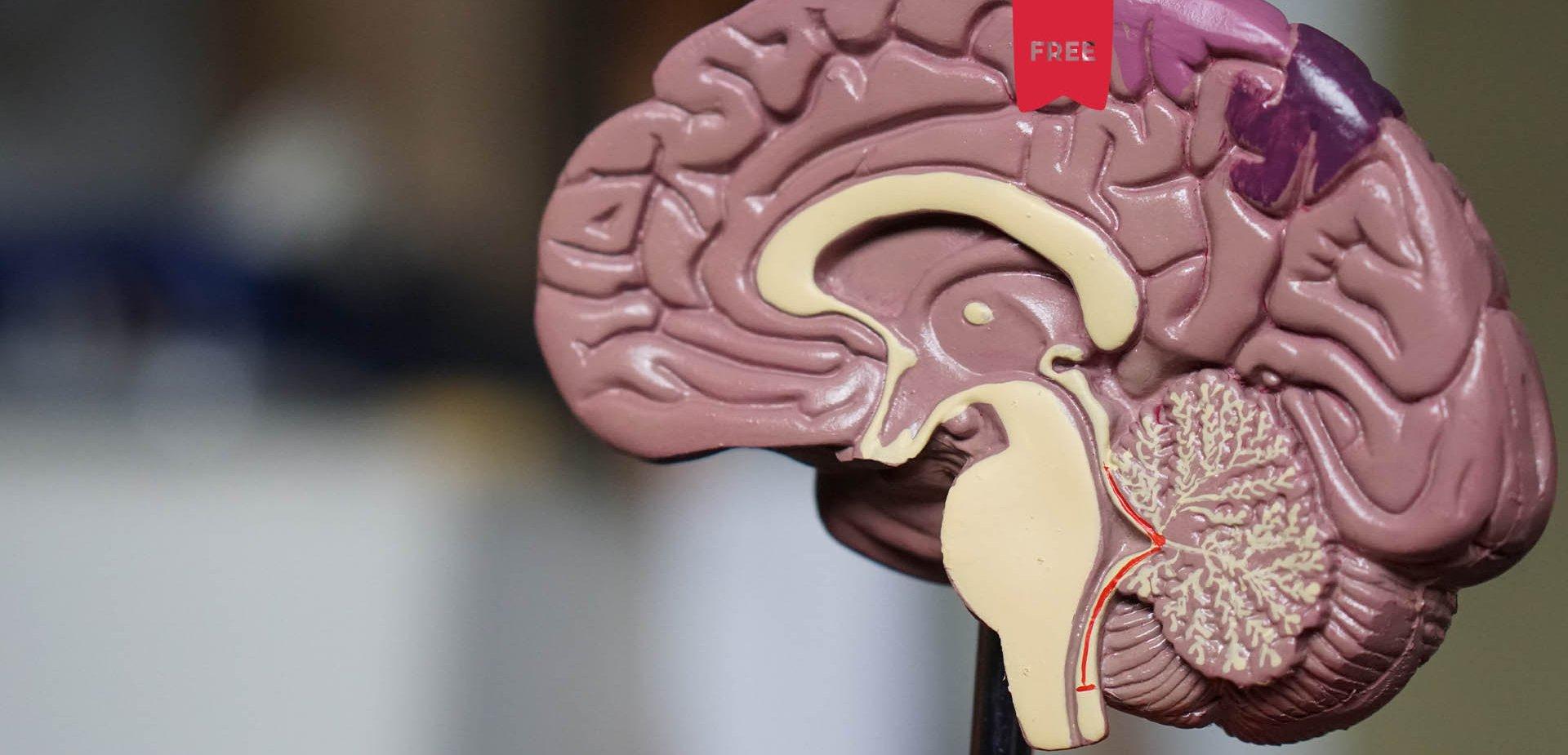 Sistema Postural e Propriocetivo - Neurologia Aplicada | Por Rui Faria (Bwizer Magazine)