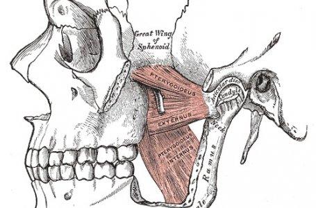 ATM (Articulação Temporomandibular): Como executar a avaliação da amplitude e técnica para aumento da abertura bocal (tutorial em e-book)