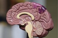 Papel do córtex somatossensorial primário no movimento