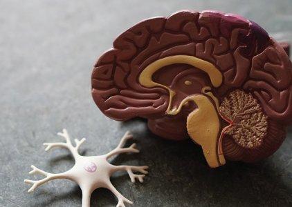 O caminho para desconstruir a Dor Neuropática | Por Albina Dias (Bwizer Magazine)