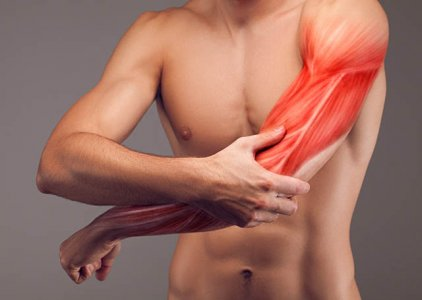 Fatores que Influenciam a Capacidade de Gerar Tensão Muscular: Fatores Estruturais | Por José Vilaça