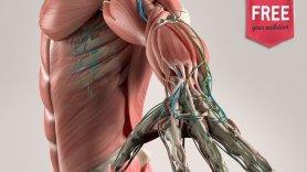 O que é a Fisioterapia: definição, áreas de atuação e estatuto legal