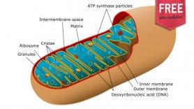 Trauma: impacto da arginina vasopressina (AVP) suplementar durante a ressuscitação do choque hemorrágico grave