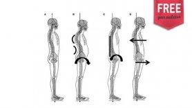 Cadeias Lesionais: reeducação postural e cadeias miofasciais