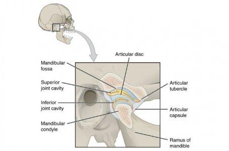 Anatomia Palpatória: palpação muscular na disfunção da articulação temporomandibular (ATM)