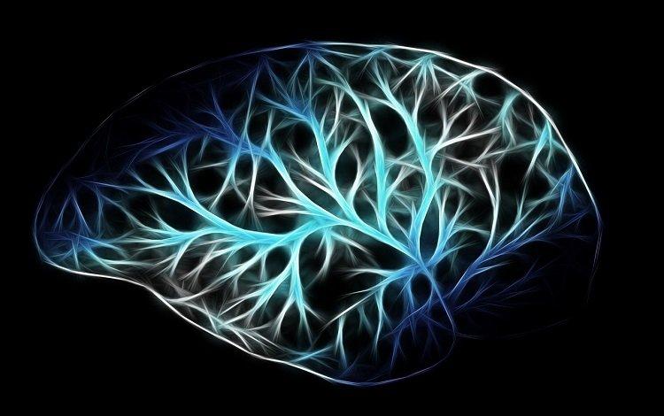 neurociência na dor crónica