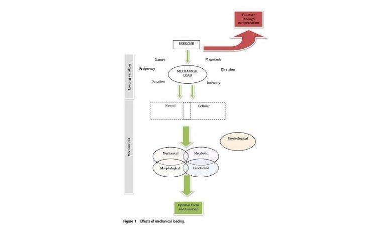 Uma abordagem conceptual à prescrição de exercício