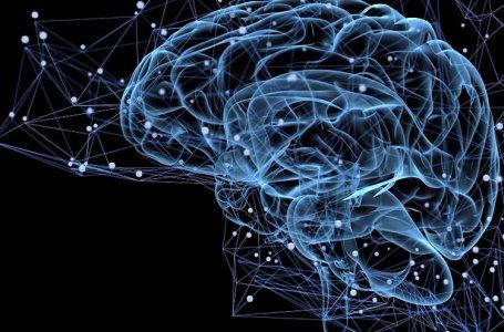 Neural Motion - Neurologia Aplicada ao Movimento
