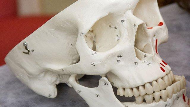ATM anatomia