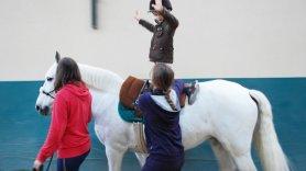 Terapias assistidas por animais: definição, benefícios e diretrizes para o sucesso
